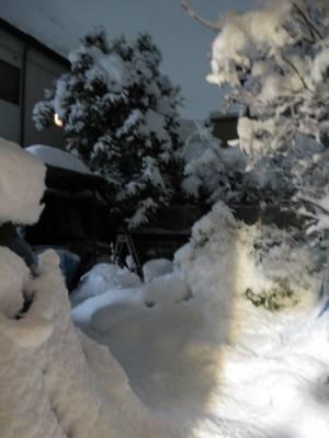 2015_01 03_下鴨の雪、裏庭