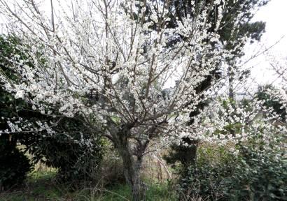 2015_03 18_3月の収穫・5