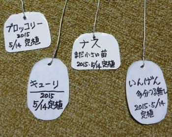 2015_05 15_畑作り・苗定植3