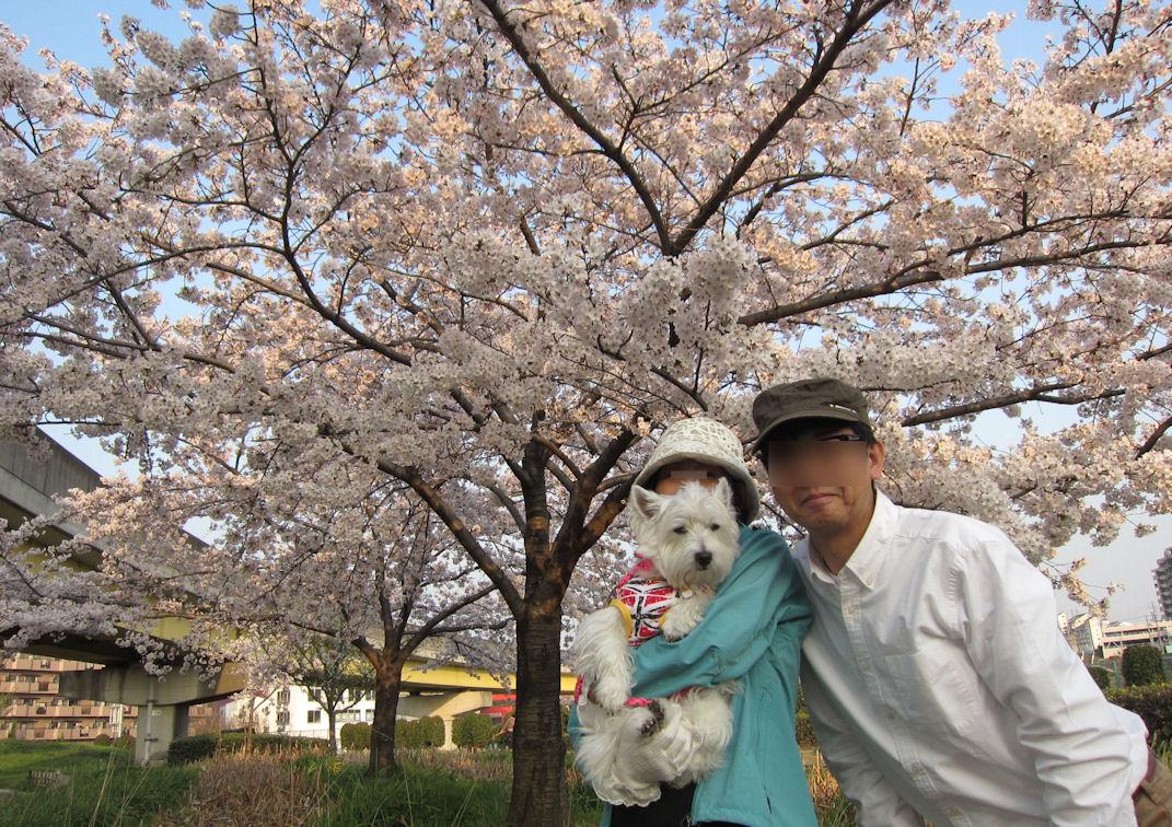 桜20150331