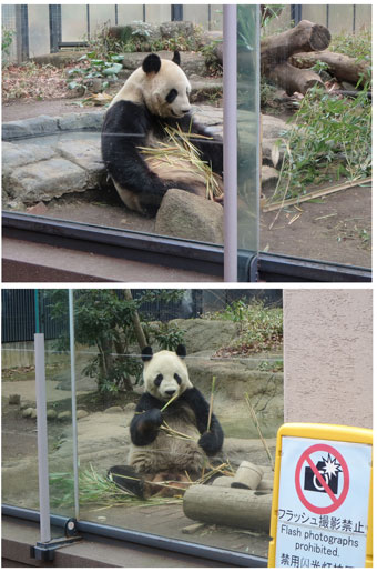 panda2015-1.jpg