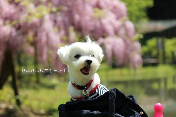 IMG_8117.jpg