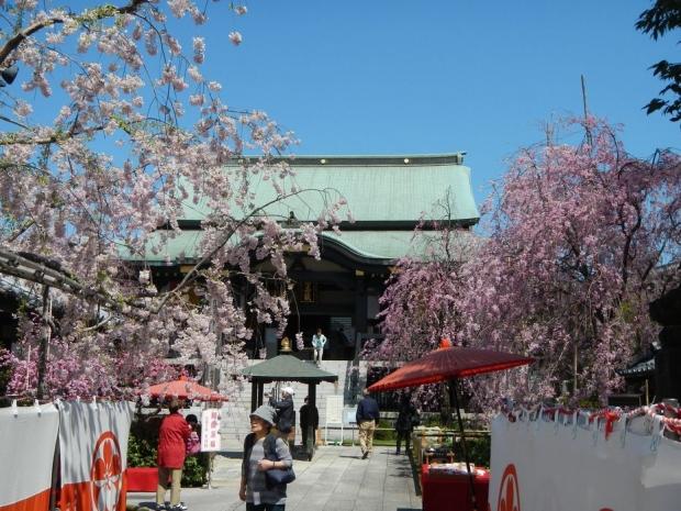 南蔵院 (2)