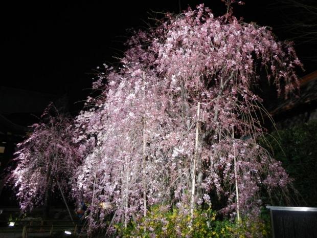 南蔵院夜景 (4)