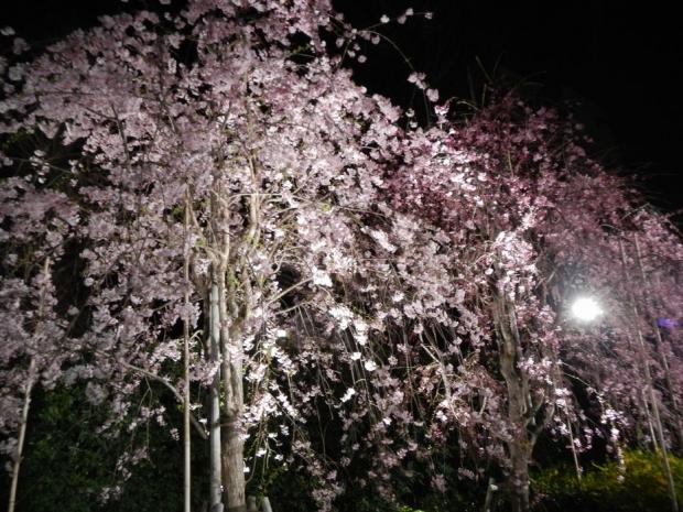 南蔵院夜景 (6)