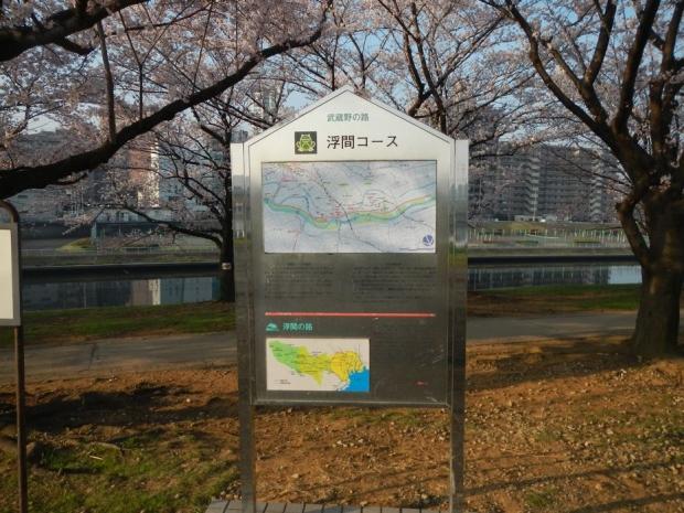 通勤路桜2015 (24)