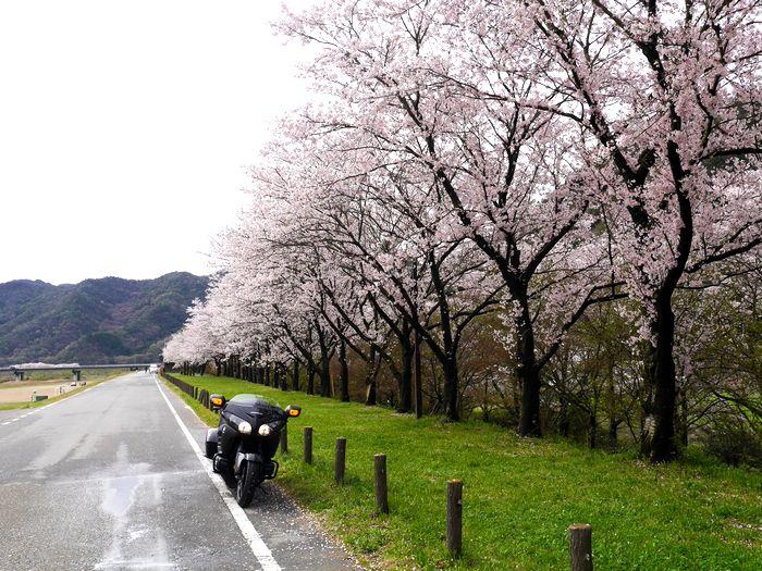 桜めぐりツー (5)