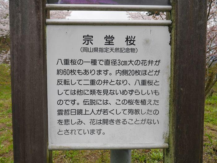 桜めぐりツー (8)