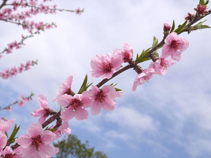 桜めぐりツー (20)