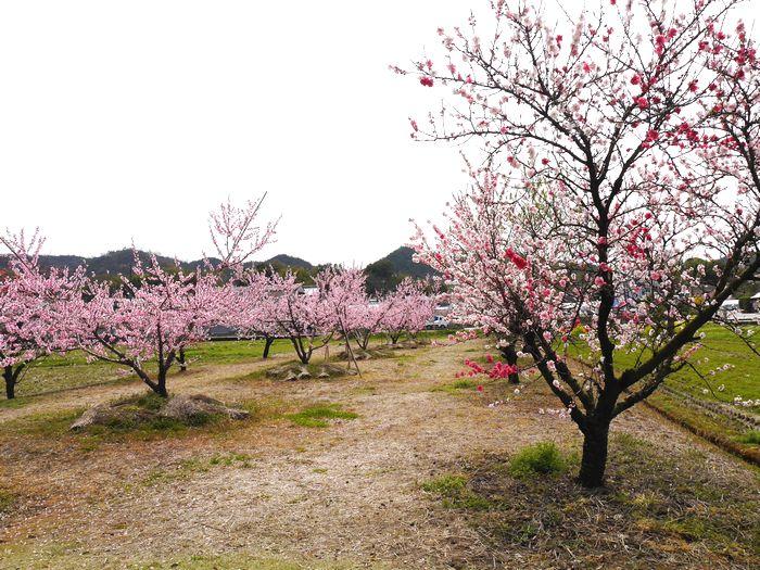 桜めぐりツー (21)