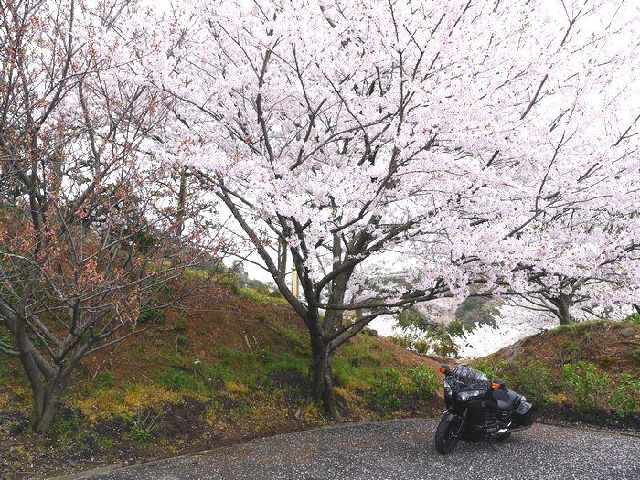 桜めぐりツー (29)