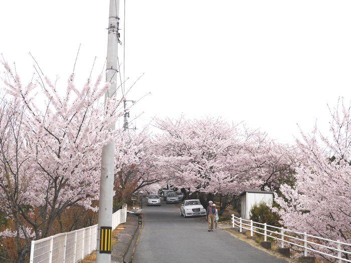 桜めぐりツー (28)