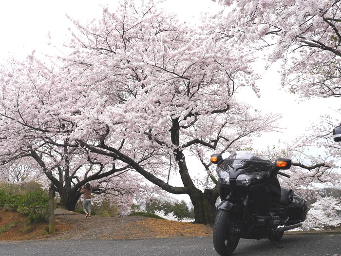 桜めぐりツー (25)