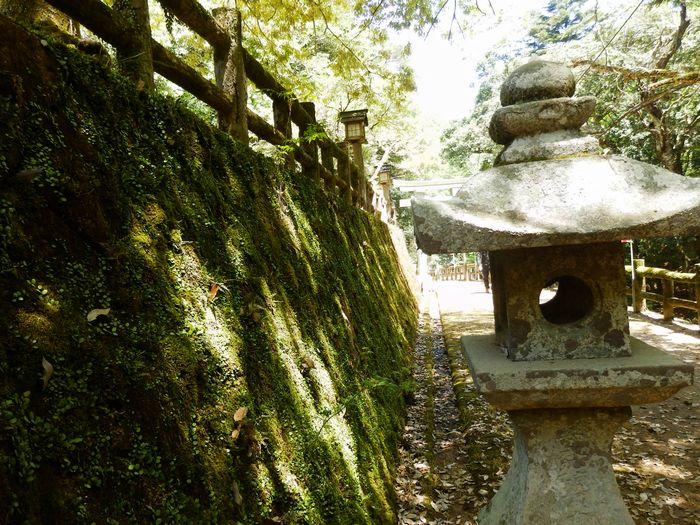 八塔寺、いこいの村林道 (22)