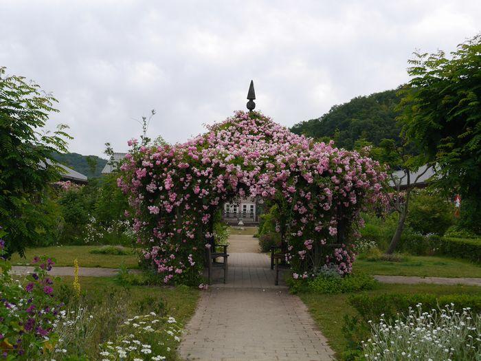 英国庭園、児島 (3)