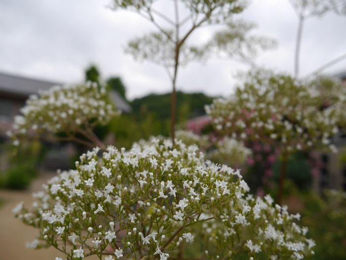 英国庭園、児島 (14)