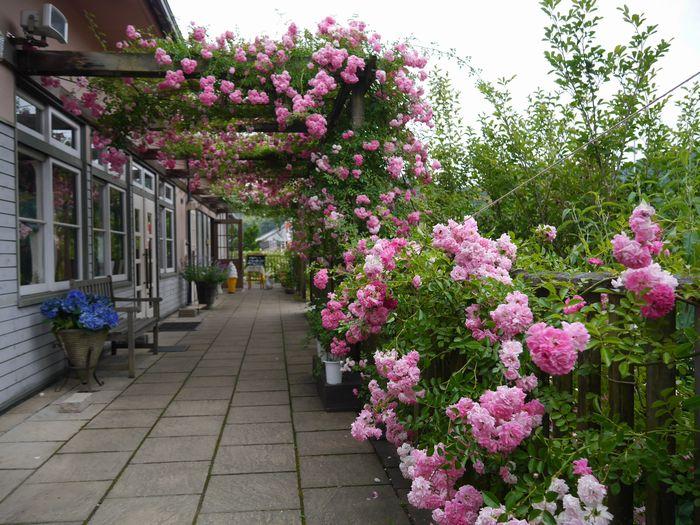 英国庭園、児島 (10)
