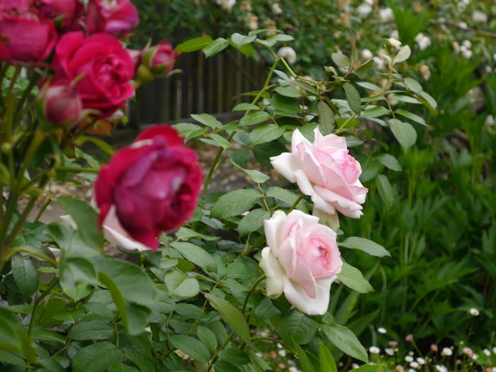 英国庭園、児島 (7)
