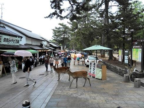 4 奈良市・春日野町