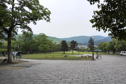 5 奈良公園