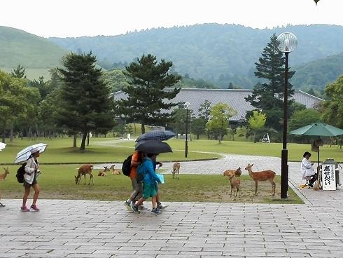 6 奈良公園