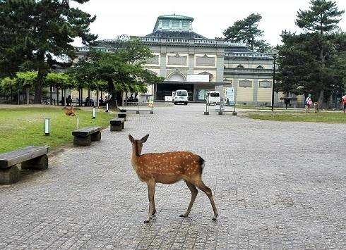 7 奈良国立博物館(旧館)