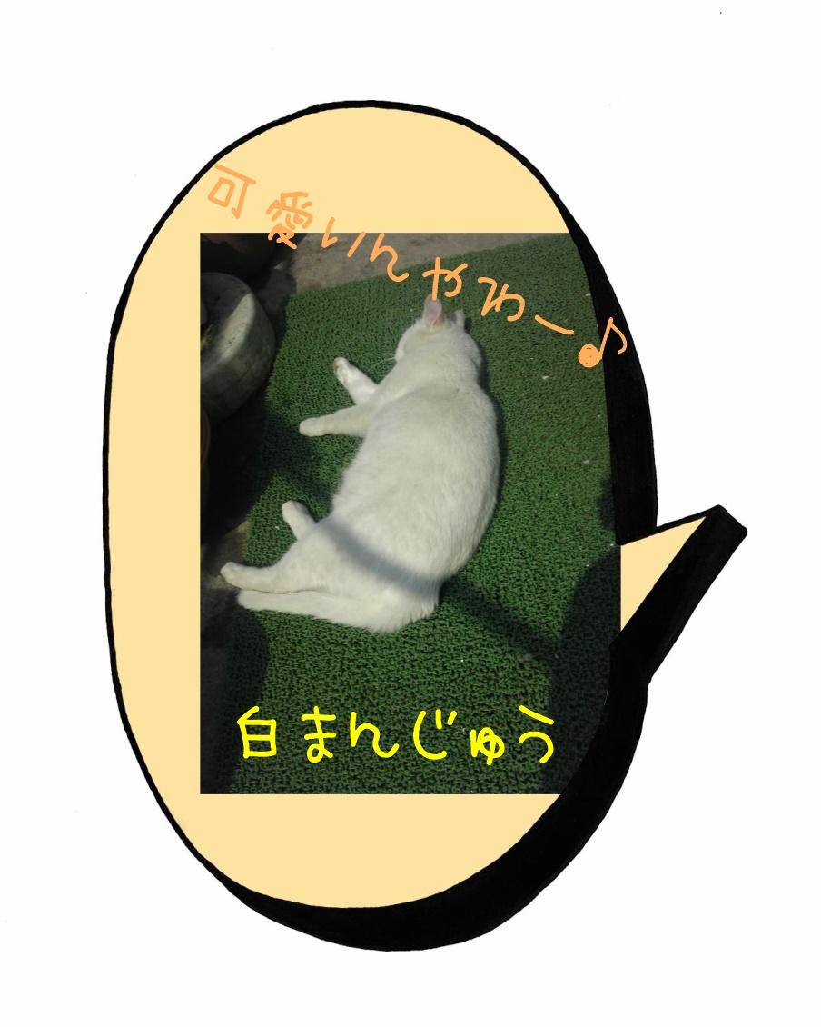 庭ねこ=白まんじゅうのおやすみ
