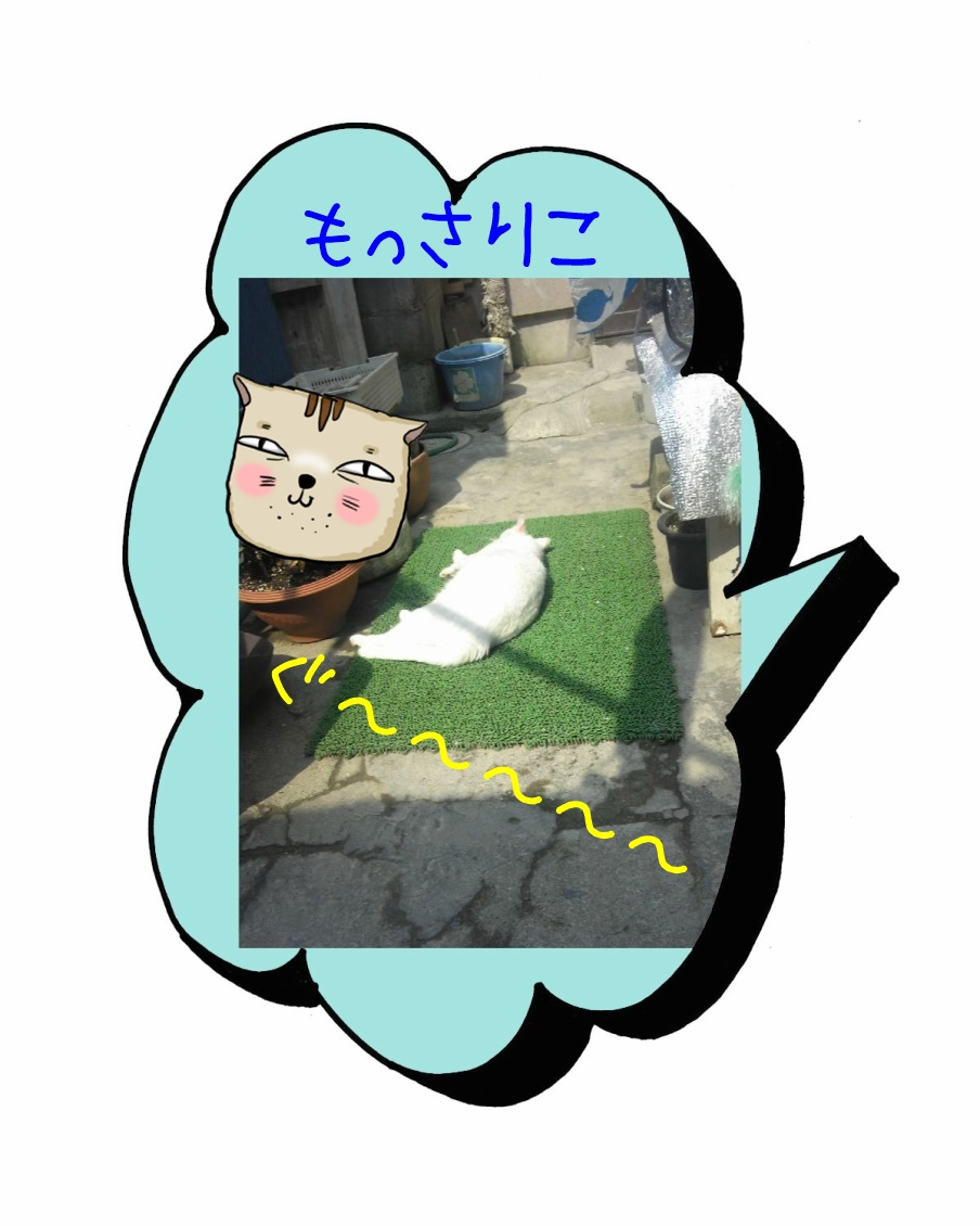 庭ねこ=白まんじゅうのおやすみ1