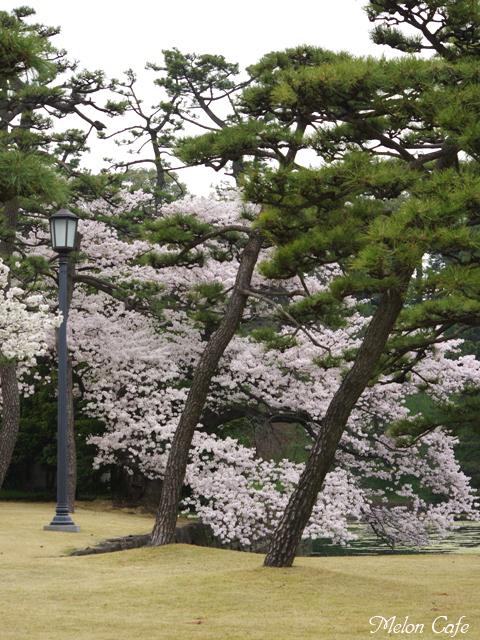 都内の桜03