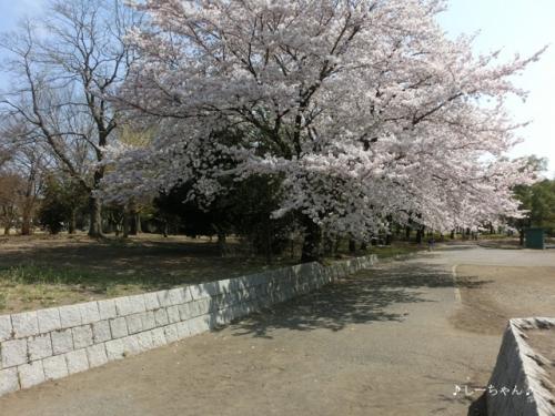 熊谷さくら運動公園 #2_01