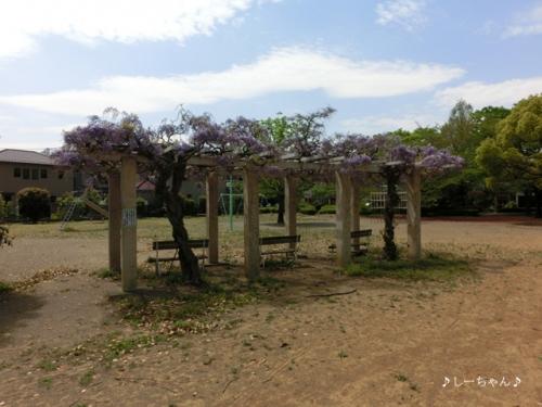 藤の花2015_01