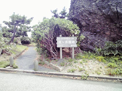 20150316銭ヶ浜・園地下 (7)