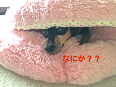20150610-1.png