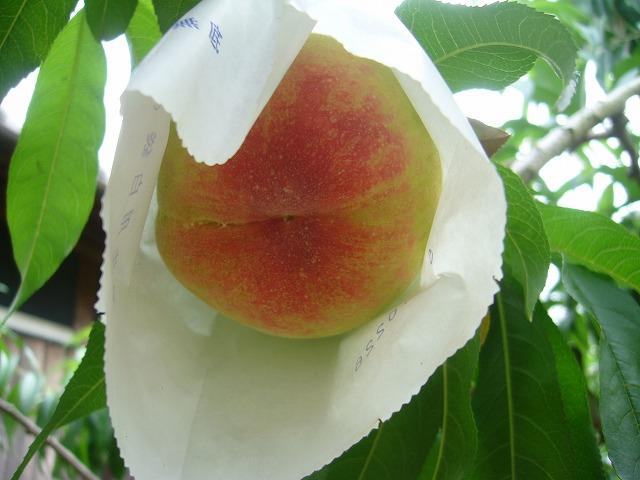 桃の実 27.6.21