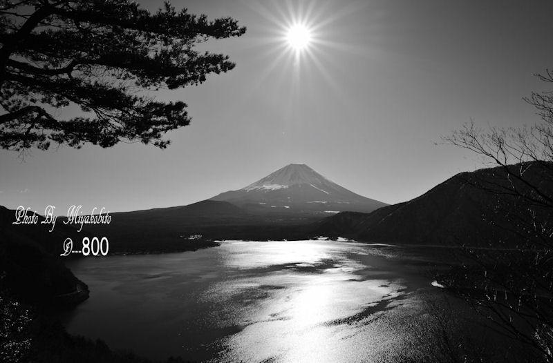 DSC_7900.jpg