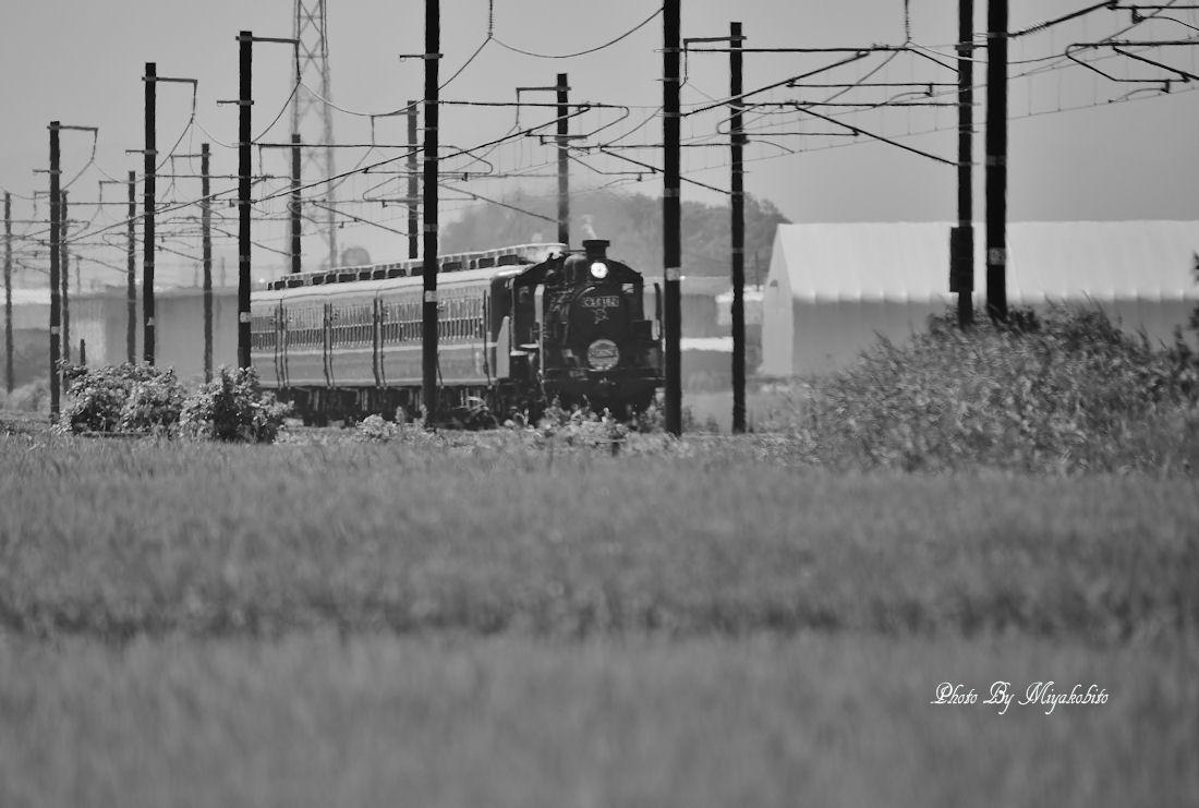 DSC_9481 (2)
