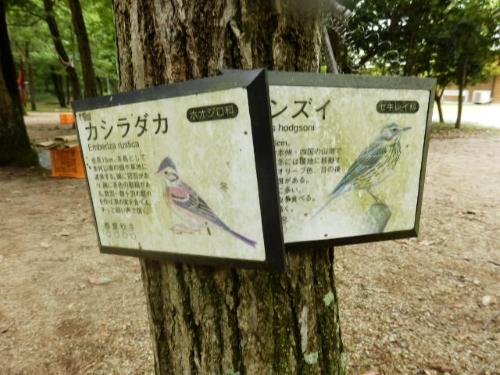 三木ホースランドパーク (9)_resized