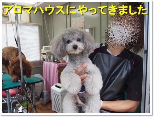 20150719_098.jpg