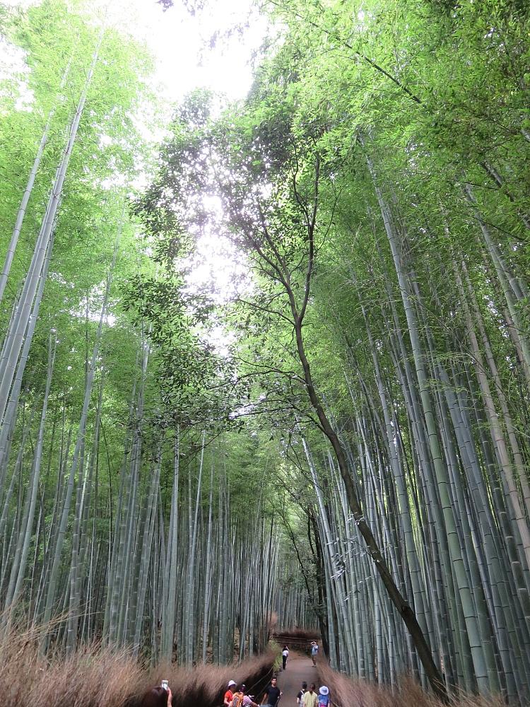 Kyoto Japan 京都 嵐山 竹林