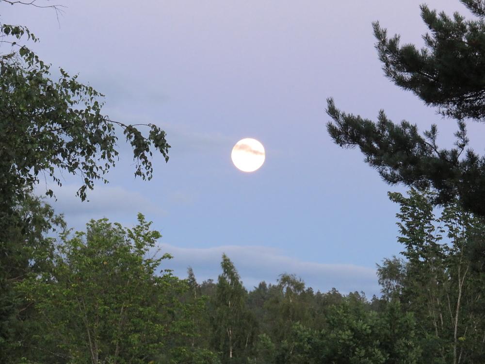 Blue Moon ブルームーン