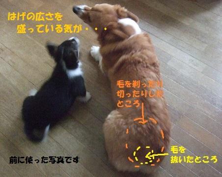 01150411DSCF0221.jpg