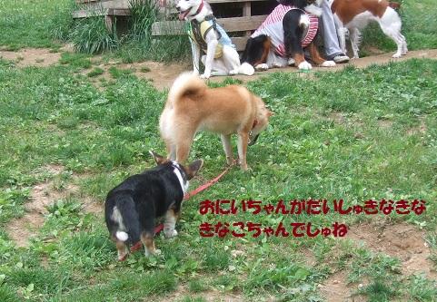 07150615DSCF0127.jpg