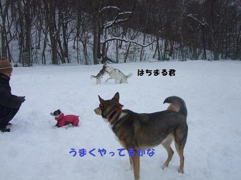 08141230DSCF0067.jpg