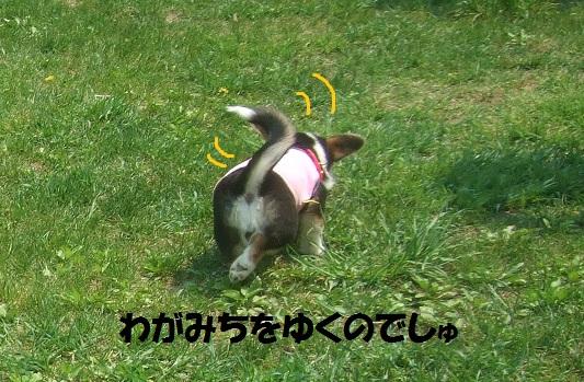 09150524DSCF0024.jpg