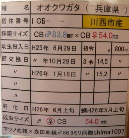 P1010431 (412x440)