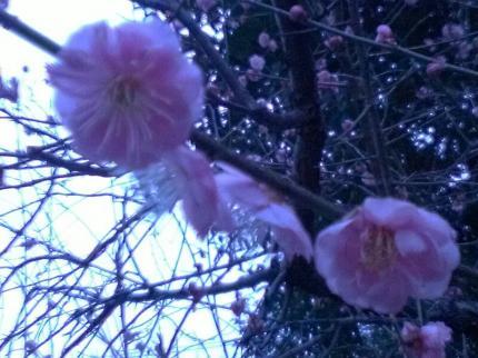 fc2_2015-02-25_19-41-28-814.jpg