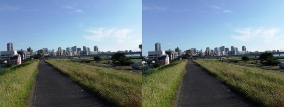 淀川河川公園道④(平行法)