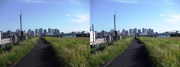 淀川河川公園道③(平行法)