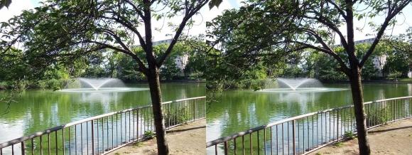 城北公園 大池①(交差法)