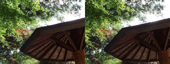 城北菖蒲園 庭園③(交差法)